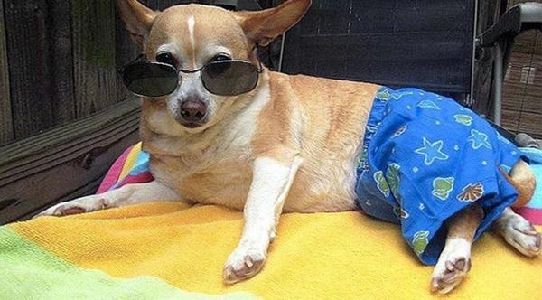 Dogilike.com :: อันตราย! 4 เมนูห้ามให้น้องหมากินเด็ดขาดในหน้าร้อนนี้