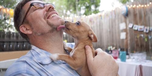 Dogilike.com :: 5 วิธีง่าย ๆ ป้องกันไม่ให้น้องหมาเป็น Hot Spot