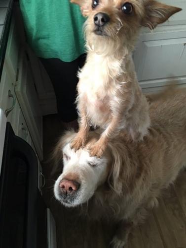 Dogilike.com :: คู่หูคู่ซี้! เรื่องราวน่ารัก ๆ ของน้องหมาตัวจิ๋วที่ชอบขี่หลังเพื่อนตูบตัวโต
