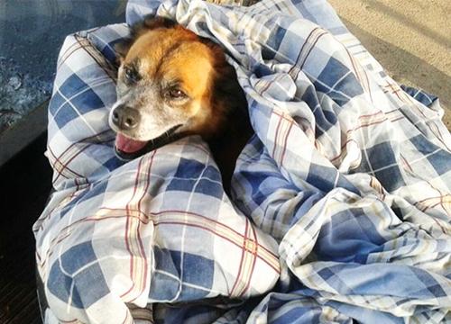 Dogilike.com :: เจ๋งสุดๆ! บราซิลใช้ยางรถยนต์เก่าทำเป็นเตียงให้สุนัขจรจัดนอนคลายหนาว