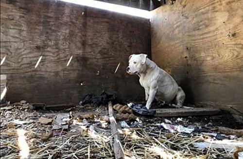 Dogilike.com :: สะเทือนใจ! สุนัขกัดขาตัวเองจนขาดจากโซ่ หลังถูกล่ามทิ้งบ้านร้างนาน 5 ปี (มีคลิป)