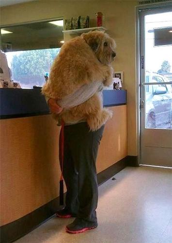 Dogilike.com :: 10+ ภาพชวนยิ้ม เมื่อน้องหมากลัวสิ่งที่ไม่น่ากลัว !