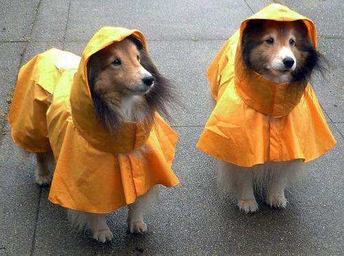 Dogilike.com :: 6 ทริคดี ๆ ทำให้น้องหมามีความสุขในวันฝนตก