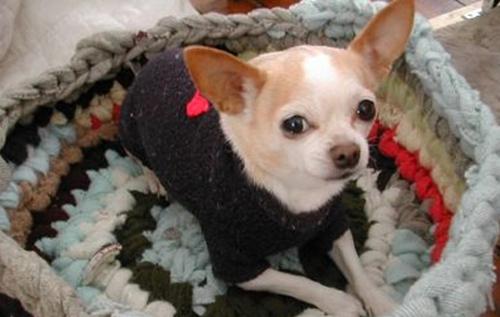Dogilike.com :: 5 วิธีป้องกันไม่ให้น้องหมาป่วยง่าย ๆ ในหน้าฝน !