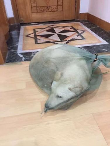 Dogilike.com :: หนุ่มควักเงินซื้อชีวิตสุนัข หลังเห็นถูกจับยัดใส่ถุงขายเป็นอาหารในจีน !