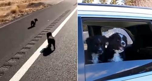Dogilike.com :: หนุ่มใจบุญเปลี่ยนชีวิต 2 ลูกสุนัข หลังพบวิ่งอยู่บนถนนกลางทะเลทราย !
