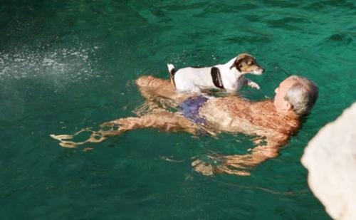 Dogilike.com :: รู้จักเจ้า Titti สุนัขสุดเท่ชอบกระโดดน้ำเป็นชีวิตจิตใจ ใครเห็นก็หลงรัก !