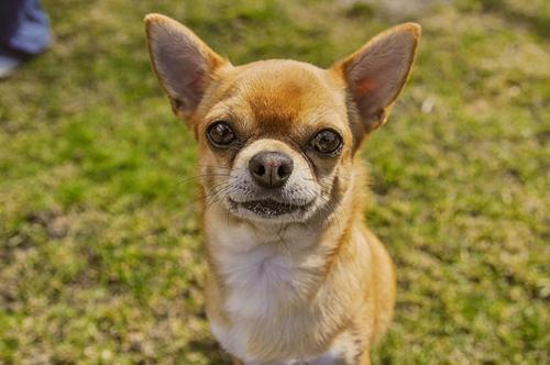 Dogilike.com :: จัดอันดับ สายพันธุ์หมาไม่ชอบน้ำ !!