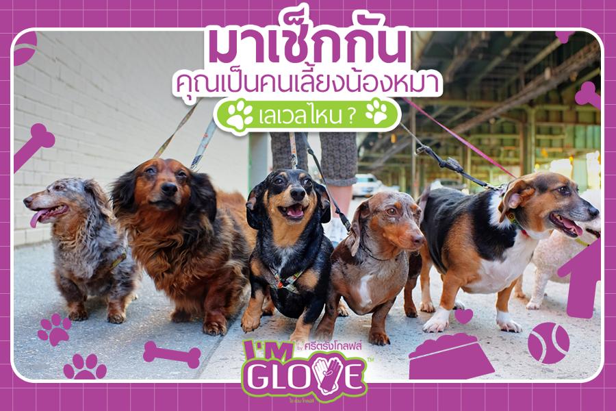 Dogilike.com :: มาเช็กกัน คุณเป็นคนเลี้ยงน้องหมาเลเวลไหน !