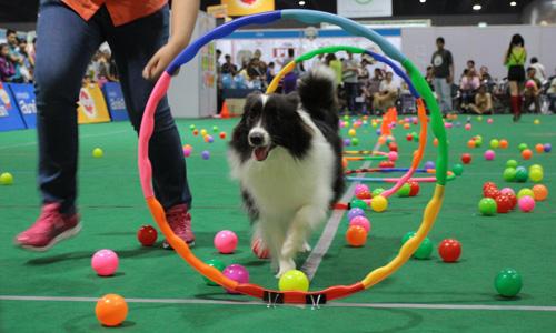 Dogilike.com :: พาทัวร์งาน Thailand International Dog Show 2017 ตอนที่ 1