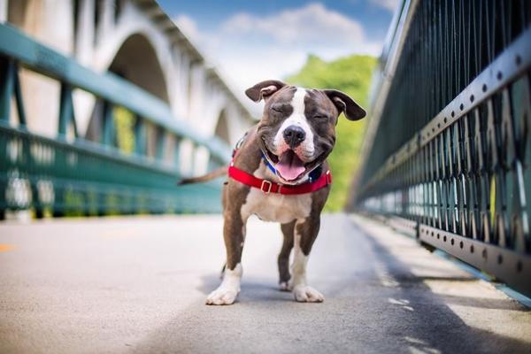 Dogilike.com :: เผยภาพถ่ายผู้ชนะจากการประกวดภาพถ่ายสุนัขแห่งปี 2017 !!