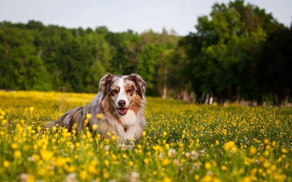Dogilike.com :: Apple Cider Vinegar กับสารพัดประโยชน์ที่ดีกับสุขภาพน้องหมา !