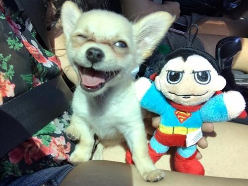 Dogilike.com :: พบลูกสุนัขถูกทิ้งลำพังในสนามบินอเมริกาฯ พร้อมจดหมายจากเจ้าของ !