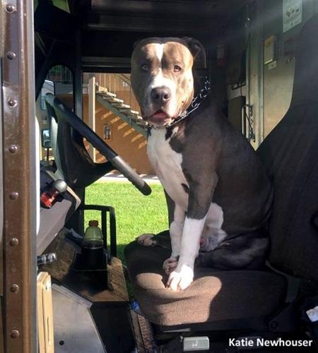 Dogilike.com :: สุดซึ้ง! พนักงานส่งของ UPS รับเลี้ยงน้องหมาหลังรู้ข่าวว่าเจ้าของเสียชีวิต