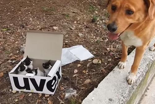 Dogilike.com :: ปรบมือรัวๆ ตูบแสนรู้นำทางเจ้าของไปช่วยชีวิตลูกแมวถูกทิ้งกลางหุบเขาในกรีซ !!