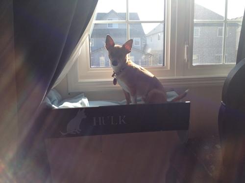 Dogilike.com :: จัดอันดับ 5 เรื่องสุดหวีด ที่น้องหมาทำเจ้าของใจหายใจคว่ำ !!