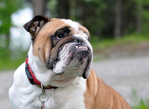 Dogilike.com :: เลี้ยงด้วยรัก! 4 อวัยวะของน้องหมาที่เจ้าของต้องดูแลเป็นพิเศษ