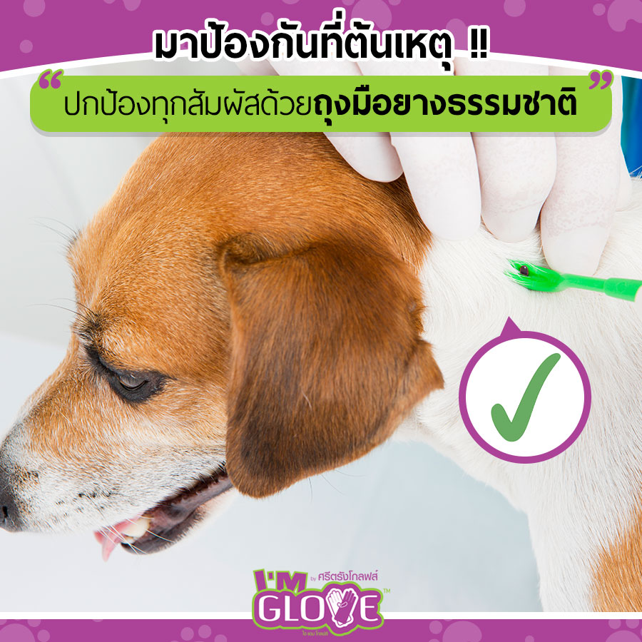 Dogilike.com :: เคลียร์ชัดๆ 4 ปัญหาดราม่าเห็บหมัด !!