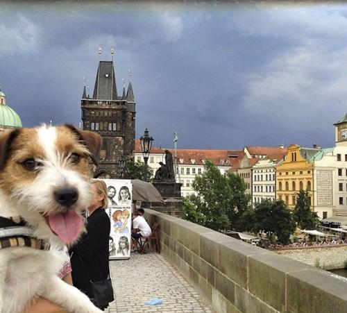 Dogilike.com :: เจ้าตูบตัวนี้ไปเที่ยวมาแล้ว 22 ประเทศ ภาพถ่ายจะสวยแค่ไหนมาดูกัน !!
