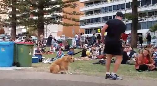 Dogilike.com :: ชาวเน็ตช่วยลุ้น! คลิปโกลเด้นฯ งอแงไม่ยอมกลับบ้านหลังติดใจสวนสาธารณะ