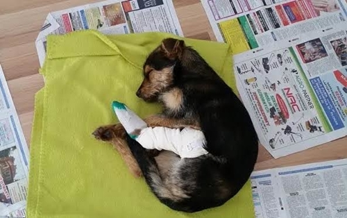 Dogilike.com :: คู่รักพบเจ้าตูบบาดเจ็บแอบหลบอยู่ในท่อน้ำ ก่อนรับเลี้ยงเป็นสุนัขสุดรัก !
