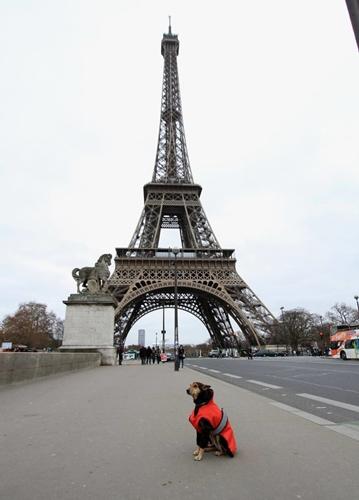 Dogilike.com :: ตูบจรจัดในอินเดียถูกรับเลี้ยงและวันนี้มันได้ท่องเที่ยวไปทั่วโลกพร้อมเจ้าของ !