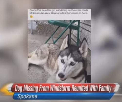 Dogilike.com :: สุนัขพลัดหลงกับเจ้าของช่วงภัยพิบัติกว่า 2 ปี วันนี้ฝันเป็นจริงแล้ว !