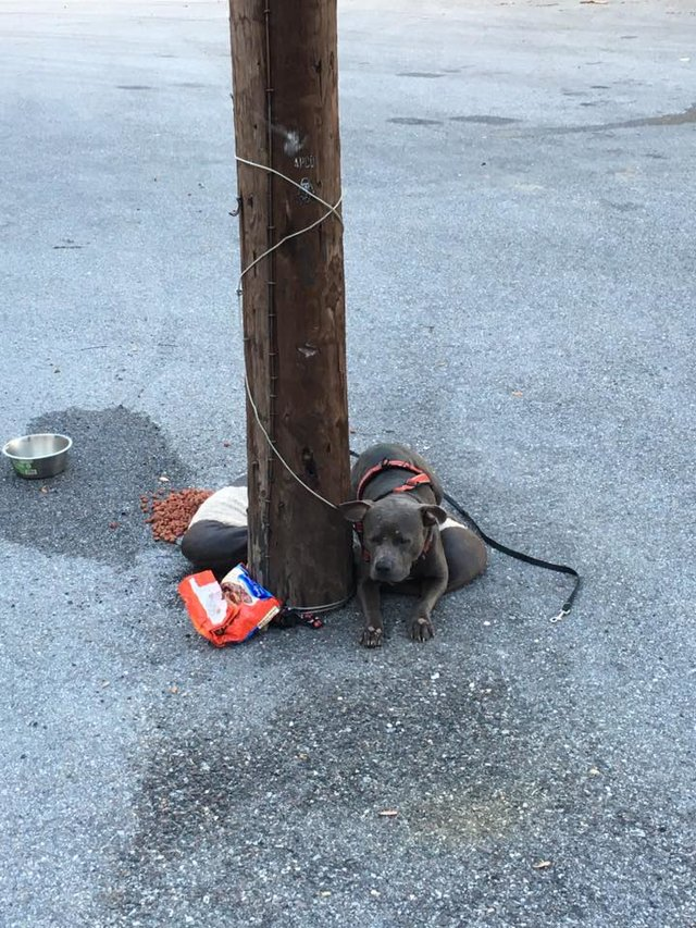 Dogilike.com :: พิทบูลฯถูกล่ามทิ้งไว้พร้อมเบาะนอนบริเวณหน้าศูนย์ช่วยแมวในสหรัฐฯ !