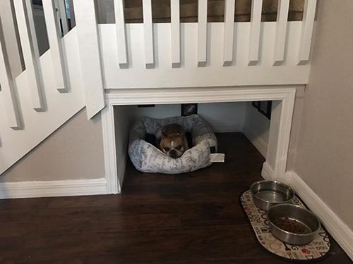 Dogilike.com :: หนุ่มผุดไอเดียเปลี่ยนห้องใต้บันไดเป็นห้องนอนของเจ้าตูบ !