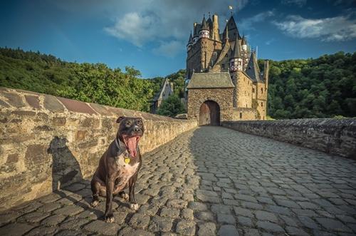 Dogilike.com :: ทำความรู้จัก เจ้า Alfie น้องหมานักผจญภัยเดินทางทุกที่ไปกับเจ้าของ !