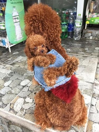 Dogilike.com :: หนุ่มเวียดนามเปลี่ยนเสื้อยีนส์เก่าทำเป็นเป้สะพายหลังให้ตูบไว้พาลูกเที่ยว !!