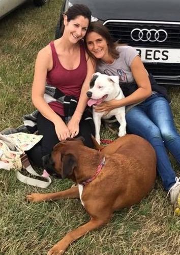 Dogilike.com :: สุนัขป่วยถูกเจ้าของทิ้งจนผอม วันนี้มันได้รับการรักษาด้วยเก้าอี้พิเศษ !