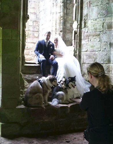 Dogilike.com :: 2 อลาสกันฯ แสนน่ารักทำหน้าที่เป็นสักขีพยานในวันแต่งงานเจ้าของ !