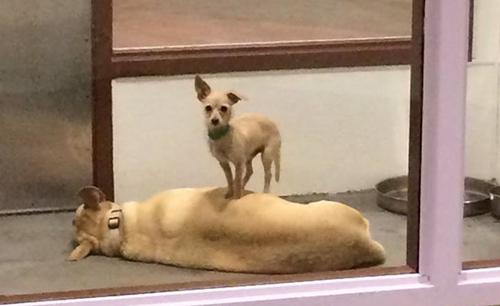 Dogilike.com :: 2 ตูบในศูนย์พักพิงฯตัวติดกันเป็นตังเม ชาวเน็ตลุ้นให้ถูกรับอุปการะพร้อมกัน !