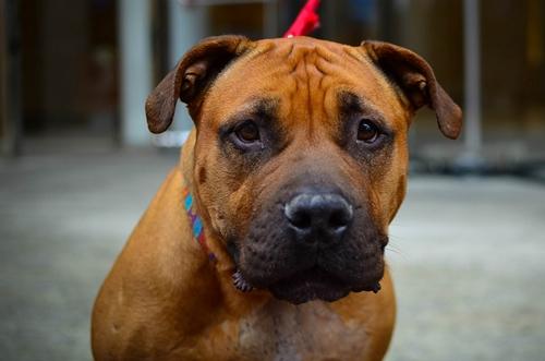 Dogilike.com :: จัดอันดับ 5 พฤติกรรมของน้องหมาที่ทำเหมือนคน !!
