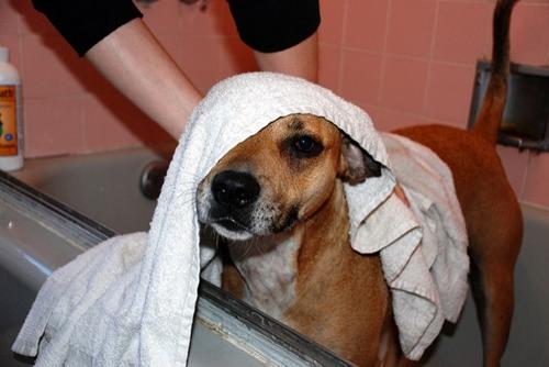 Dogilike.com :: จัดอันดับ 5 เรื่องที่เจ้าของทำแล้วน้องหมาเกลียด !!