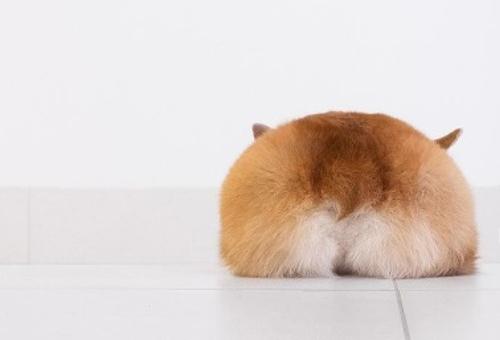 Dogilike.com :: จัดอันดับ 5 รูปถ่ายน้องหมาที่เจ้าของชอบแชร์มากที่สุด !