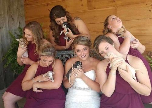 Dogilike.com :: งานแต่งสุดเก๋! เพื่อนเจ้าสาวอุ้มลูกหมาไร้บ้านแทนการถือดอกไม้