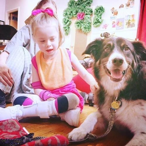 Dogilike.com :: Piggy สุนัข 3 ขาผู้เปลี่ยนวันฟ้าหม่นของทุกคนให้สดใส ยิ้มได้!