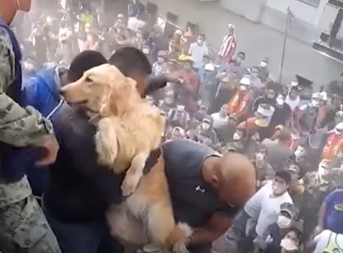 Dogilike.com :: เฮลั่น! นาทีกู้ภัยช่วยชีวิตเจ้าตูบติดซากตึกในเหตุแผ่นดินไหวเม็กซิโก