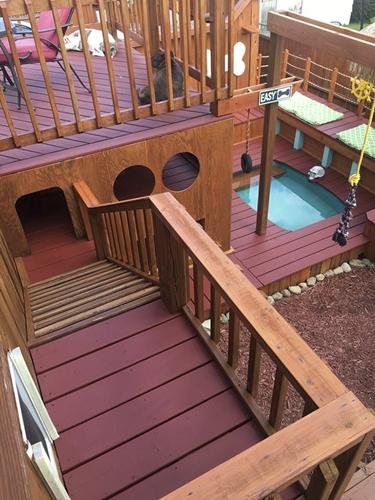 Dogilike.com :: เจ๋งสุดๆ! หนุ่มเปลี่ยนสวนหลังบ้านเป็นพื้นที่พักผ่อนให้ 4 ตูบสุดรัก