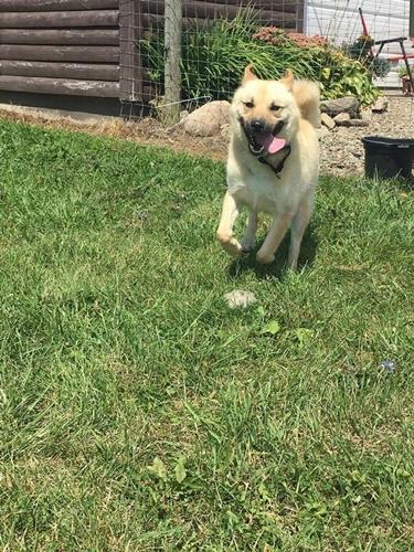 Dogilike.com :: เรื่องราวเจ้าตูบที่ถูกล่ามโซ่มาทั้งชีวิต วันนี้มันไดรับอิสระแล้ว! (มีคลิป)