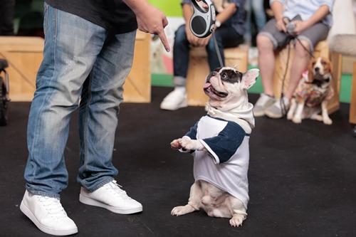 Dogilike.com :: เปิดตัว ซีซาร์แฮปปี้แคน อร่อยจนน้องหมาต้องมาต่อแถวยาวที่สุดในประเทศไทย !