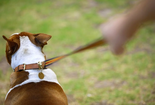 Dogilike.com :: จัดอันดับ 5 พฤติกรรมที่มักพบได้ในหมาอ้วน !