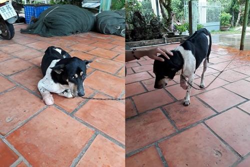 Dogilike.com :: อาสาสมัครซอยด็อกเวียดนาม เจรจา ป้าไล่ฟันขาหมา หวังพารักษา หาบ้านใหม่