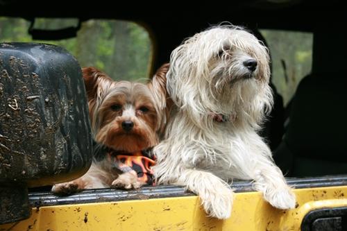 Dogilike.com :: จัดอันดับ 5 สิ่งที่คนรักหมาทำแล้วเสี่ยงเกิดดราม่า!
