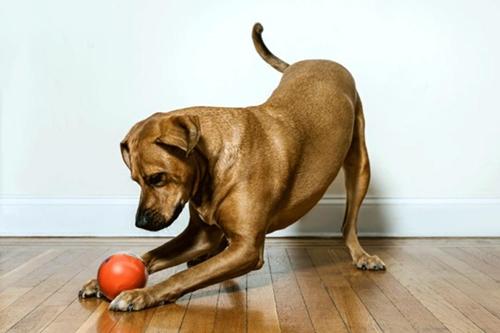 Dogilike.com :: ชวนคนเลี้ยงน้องหมามาทำ Dog Routine Schedule