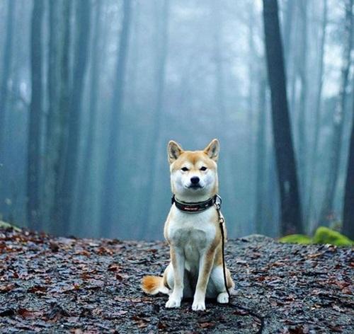 Dogilike.com :: หมาหล่อบอกต่อด้วย รวมภาพน้องหมาหน้าหล่อ ดูแล้วอบอุ่นเหลือเกิน