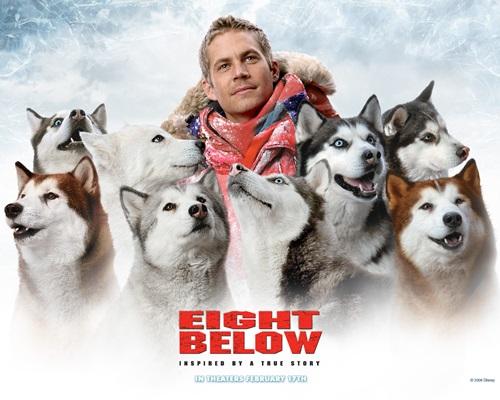 Dogilike.com :: รวม 8 หนังปัง! ที่น้องหมาแสดงนำ (ยังจำกันได้ไหม?)