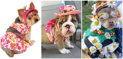 Dogilike.com :: แฟชั่นดอกไม้ฟรุ้งฟริ้ง ของเหล่าน้องหมาในวันสงกรานต์